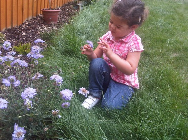 An early scabious proving endless joy for a little explorer.